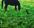 Konj-i-Pas_Lucija-Novacic