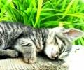Spava-mi-se-_Danijela_Markesic