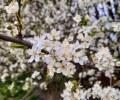 Cvijece_Ela-Acel