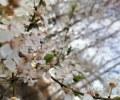 Cvijece_Enola-Dolencic