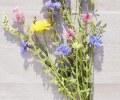 Cvijece_Ivan-Jagnjic