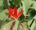 Cvijet_Marko-Sitnicic